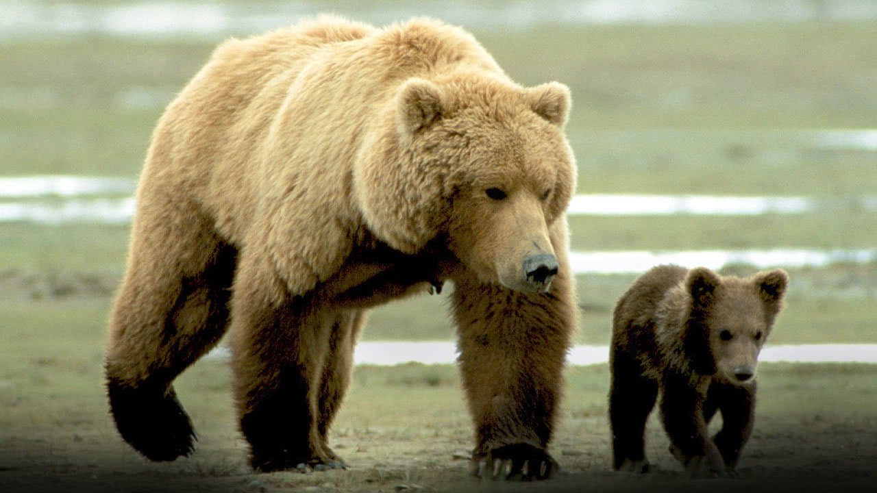 Watch Grizzly Man (2005) Full Movie on FMovies.to