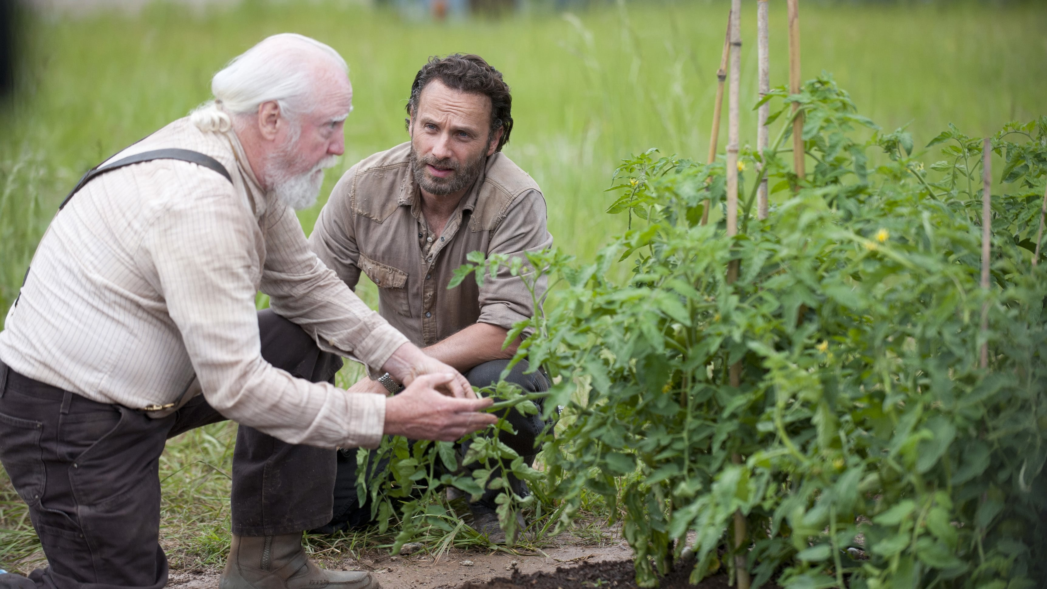 The Walking Dead – Saison 4 Streaming HD