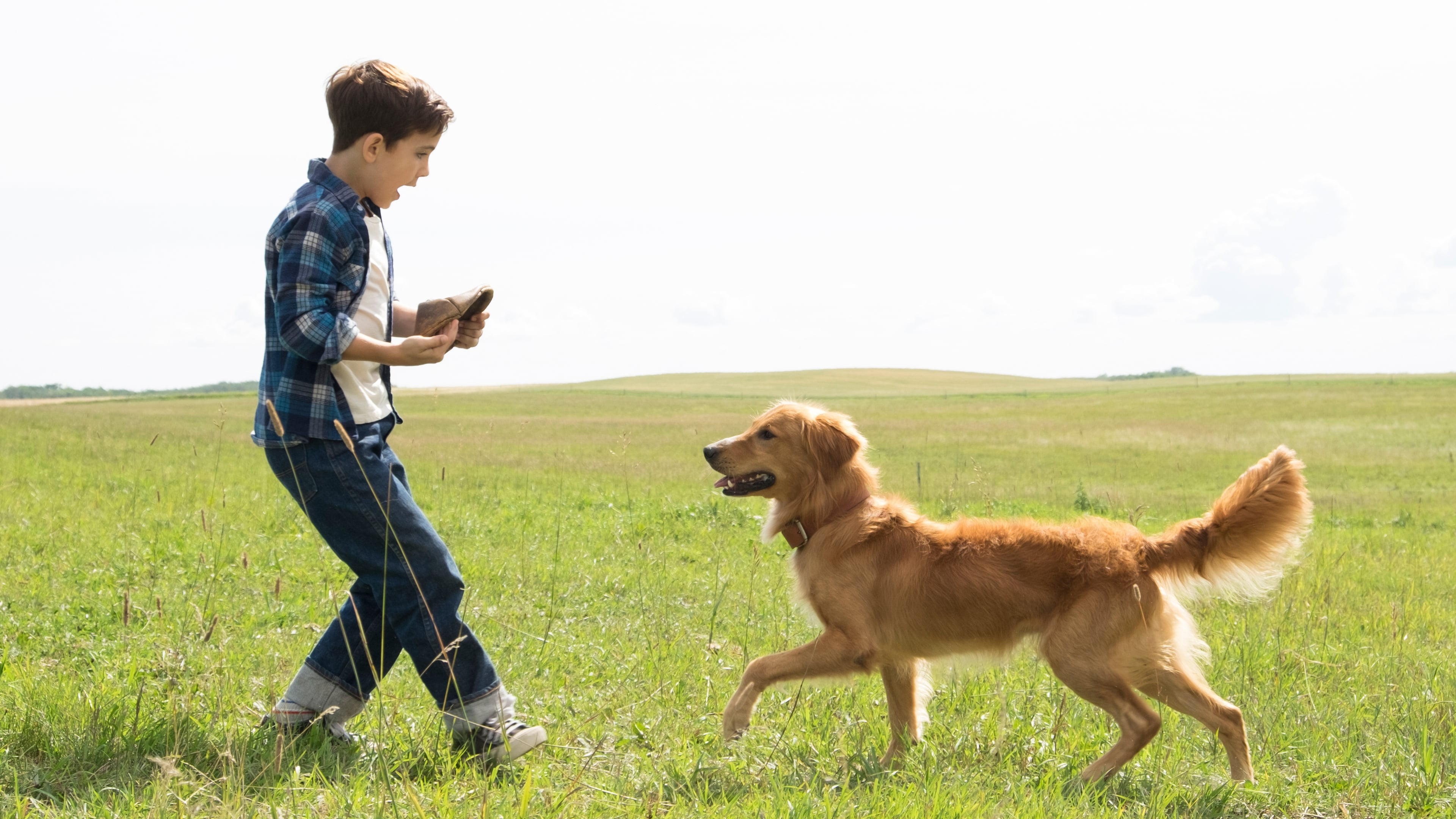 Actors From A Dog S Purpose