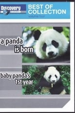 A Panda Is Born / Baby Panda's First Year
