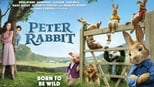 Peter Rabbit small backdrop