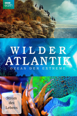 Atlantic: The Wildest Ocean on Earth - Life Stream