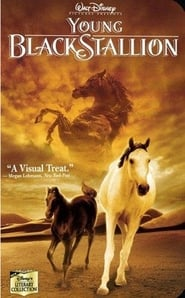 poster do The Young Black Stallion