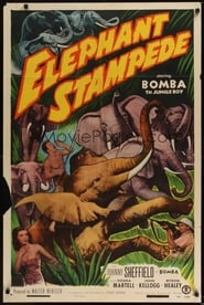 bilder von Elephant Stampede