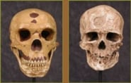 Neanderthals on Trial