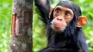 NOVA Wonders What Are Animals Saying?
