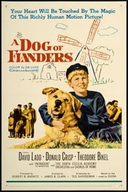 immagini di A Dog of Flanders