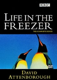 Poster of Life in the Freezer
