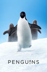 Penguins Netflix HD 1080p
