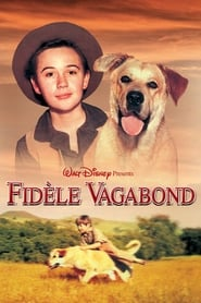 Fidèle vagabond en streaming