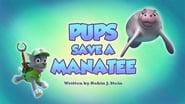 Pups Save a Manatee