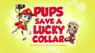 Pups Save a Lucky Collar