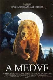 A medve