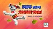 Pups Save Sensei Yumi