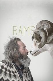 Rams / Hrutar 2015
