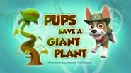 Pups Save a Giant Plant