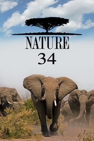 Streaming Nature poster