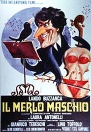 Il merlo maschio Poster