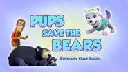 Pups Save the Bears