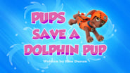 Pups Save a Dolphin Pup