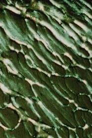 The Galilean Satellites - Europa