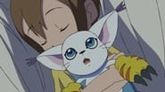 Hikari and Tailmon