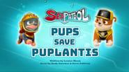 Sea Patrol: Pups Save Puplantis