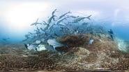 Captura de Chasing Coral (En busca del coral)