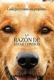 Ver La Razón de Estar Contigo Online HD Español (2017)