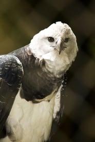 The Monkey-Eating Eagle of the Orinoco