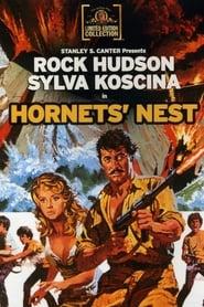 Bilder von Hornet's Nest