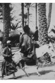 Bourricots sous les palmiers