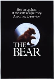 The Bear Viooz