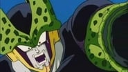 Cell's Break Down