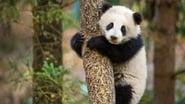 Captura de Born in China (Nacidos en China)