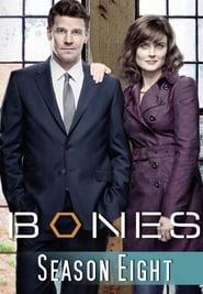 Bones - Season 1 Season 8