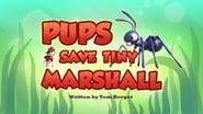 Pups Save Tiny Marshall