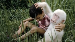 Snowflake: the White Gorilla