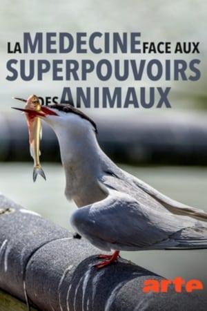 La médecine face aux superpouvoirs des animaux
