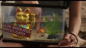 Captura de Los insólitos peces gato