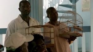 Oro (Guyane) - Episodio 7 episodio 7 online
