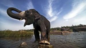 The Elephant Men