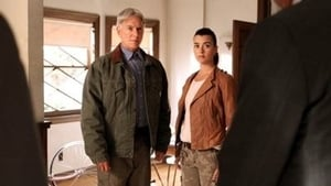 NCIS Season 10 : Damned If You Do