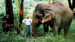 The White Elephants of Thailand with Meg Ryan