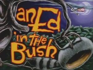 An Ed in the Bush