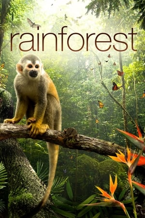 Secret Life of the Rainforest