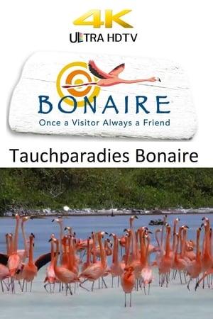 Tauchparadies Bonaire