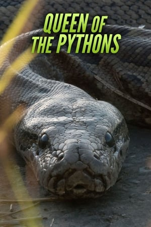 Queen of the Pythons
