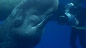 Ocean Giants: Part Two - Deep Thinkers