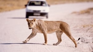 The Vanishing Lions
